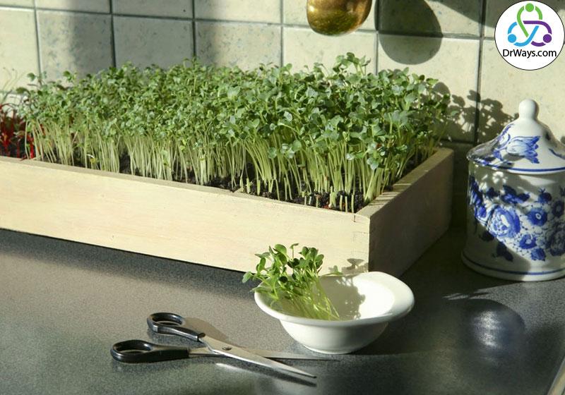 پرورش گل و گیاه خانگی به عنوان شغل دوم