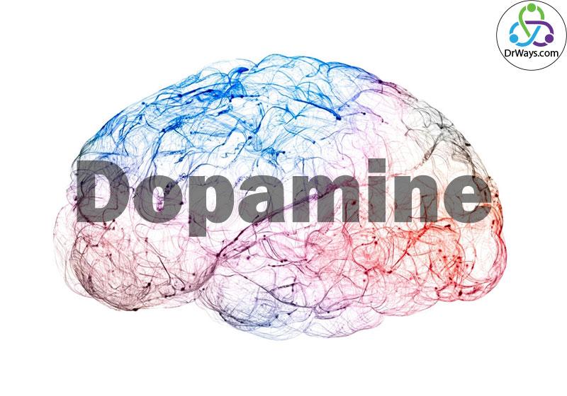 کارکرد دوپامین در مغز